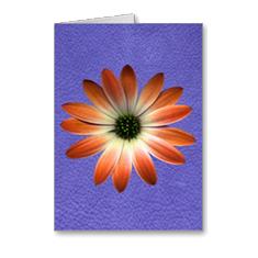 Daisy-cards