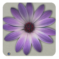 Daisy-purple-stone