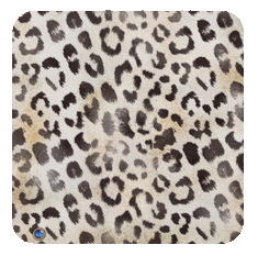 leopard-ivory