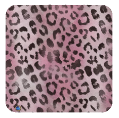 leopard-rose